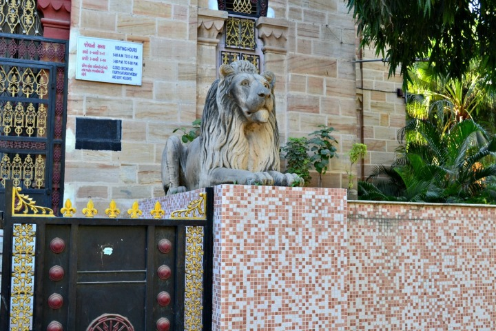 The lions outside Watson museum