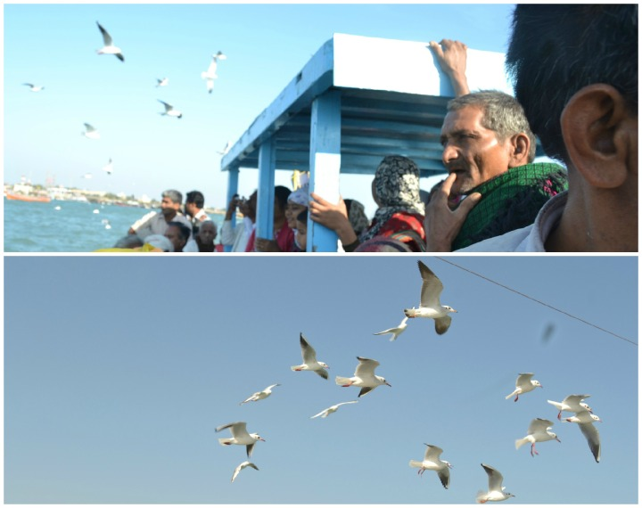 Seagull's travelling to see Ranchorji
