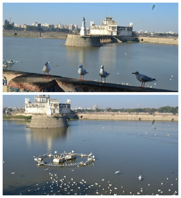 Jamnagar Museum - In the middle of a small lake - full of thousands of Seagull's and a few hundred Cormorant's, Spotted Duck's, Pelican's