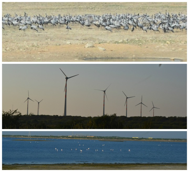 Outskirts of Dwarka - Hundreds of Demoiselle Cranes, Windmills, Flamingoes