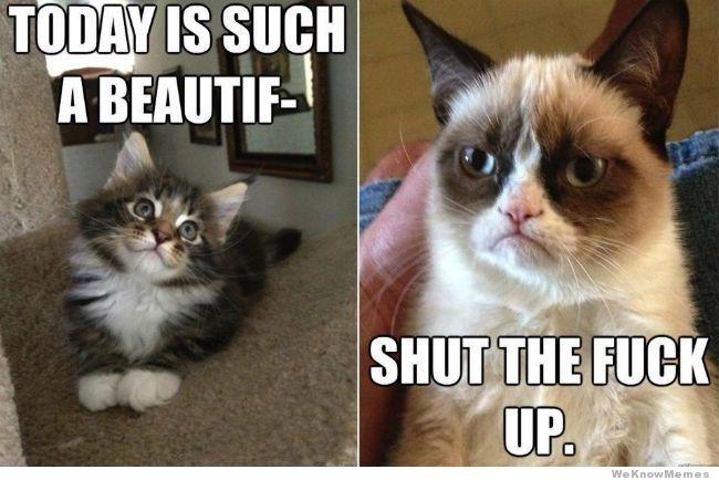 valentines day grumpy cat memes 3 - Grumpy Cat Valentine
